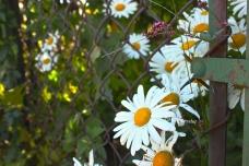 Summer Garden - 2014